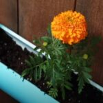 Use water pipes as flower pots!