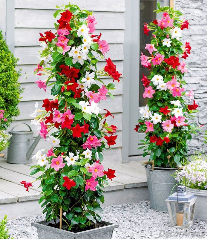 Colorful Flower Tower for the Garden