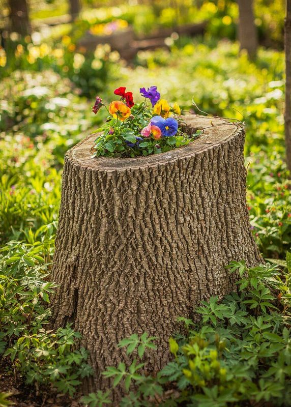 Using Tree Root as a Garden Container