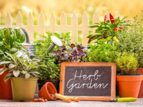 Grow Herbs and Veggies