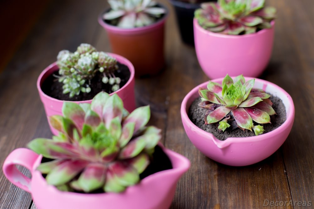 Plant in Teacups and Jugs