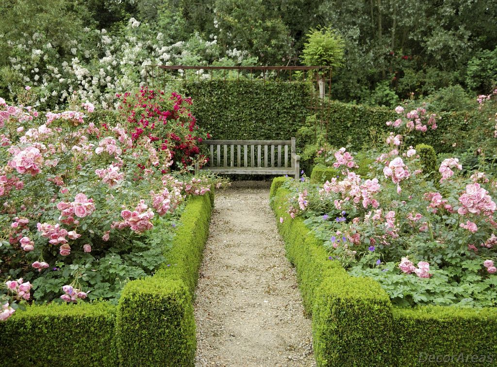 Walking path with roses