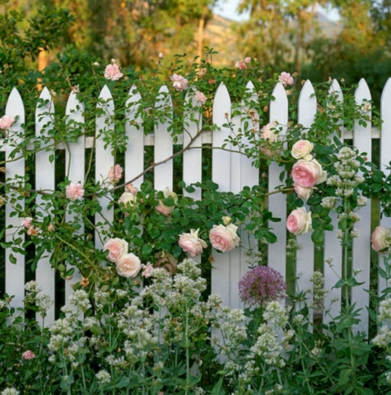 Decorating Garden Fences with Roses